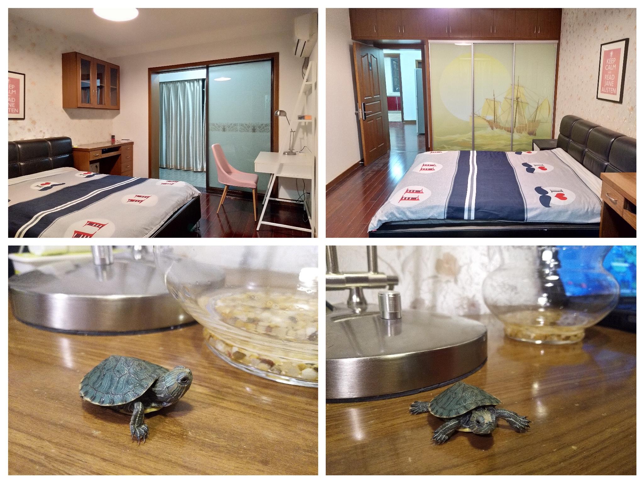 我的小窝和我的小乌龟
